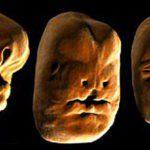 Como é formado o rosto humano? [Vídeo]