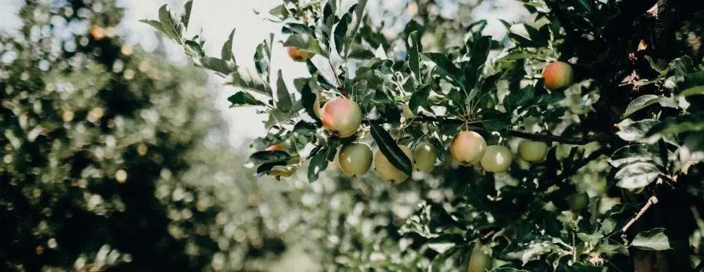 apple-cider-history-timeline