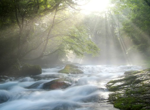 Cascading Stream under Sunlight in Forest --- Image by © Royalty-Free/Corbis