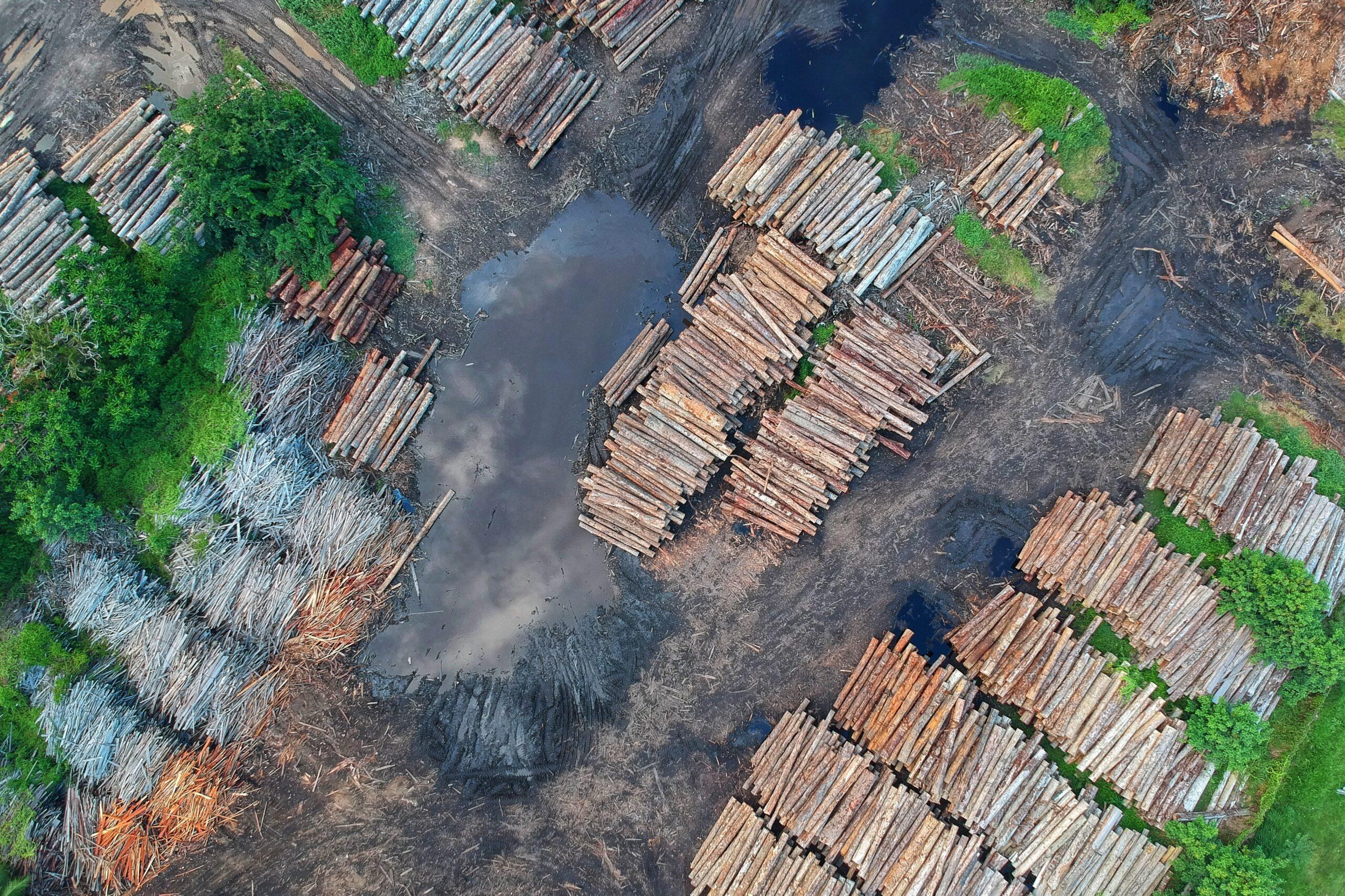 Como o desmatamento influência na propagação de doenças infecciosas?