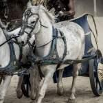 ¿Qué tienen que ver los romanos, el trasero de los caballos y los trenes?
