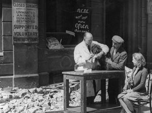 El Holocausto de las Mascotas.