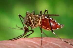 10 cosas que debes saber sobre el virus Zika.