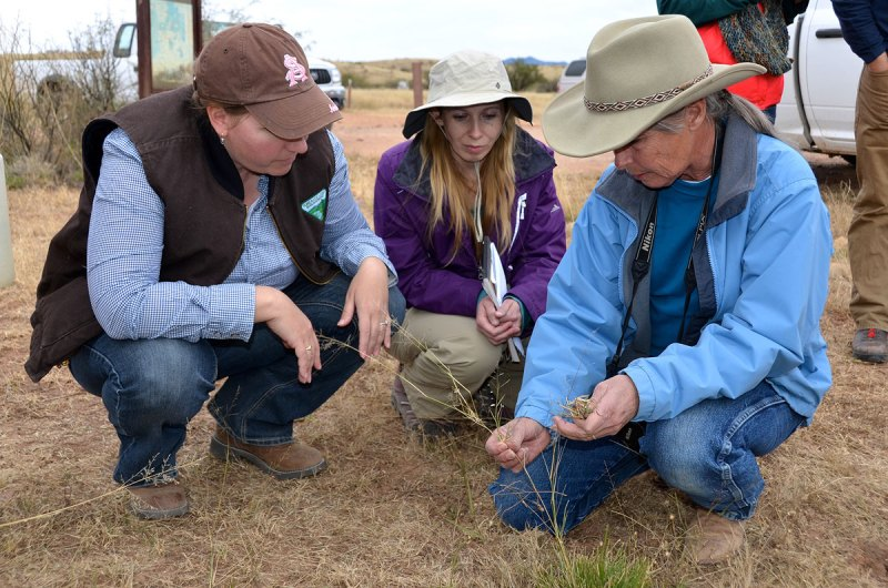 In the field: researchers with yellow bluestem