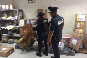 Binomio canino de la Policía Federal detecta droga en servicio de mensajería en Playa del Carmen