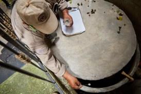 Llevan a cabo labores de control larvario en las colonias de Cozumel