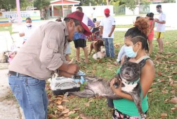 Todo listo para el arranque de la Jornada Nacional de Vacunación Antirrábica Canina y Felina 2021