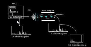Mass Spectrometry Tutorial | Chemical Instrumentation