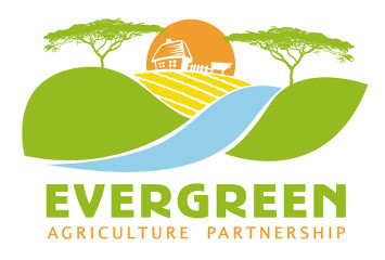 Evergreen Agriculture
