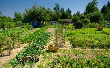 Organik Tarım Çevre İçin Neden Önemli?