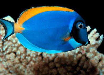 10-aquarium-fish-for-every-budget-pictures2