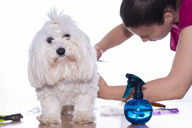 Resultado de imagen de peluquera canina