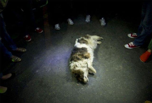 cani-liberazione-011