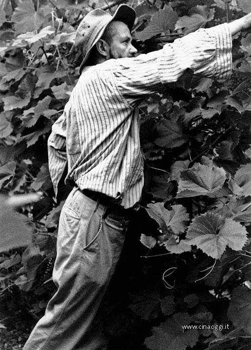 Friar Louis Duc in Weixi vineyard