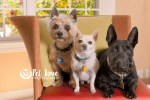 Pet Love Photography lifestyle image of three dogs.