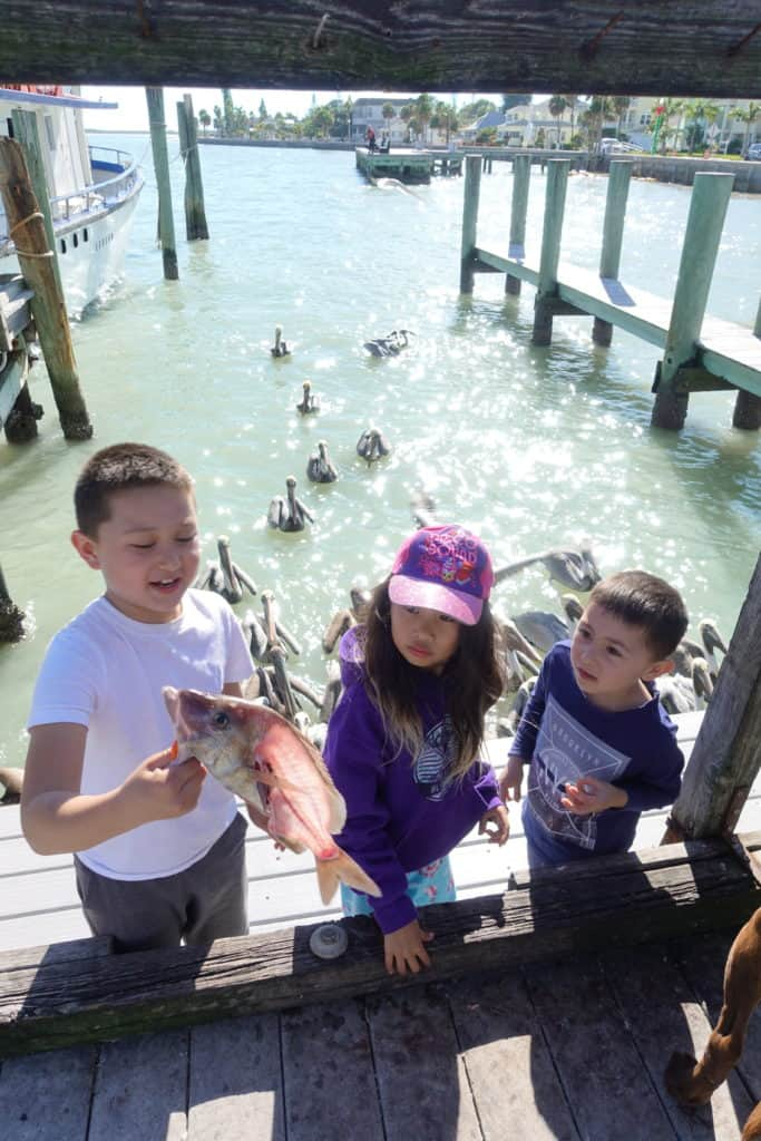 Kids throwing fish to pelicans