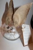 Burlap Bunny Service Jar
