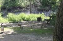 Victoria Park Campground