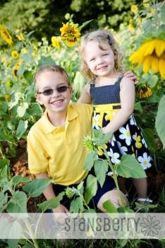 sunflowers-2072