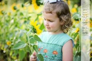 sunflowers-2226