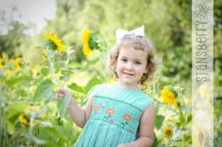 sunflowers-2247