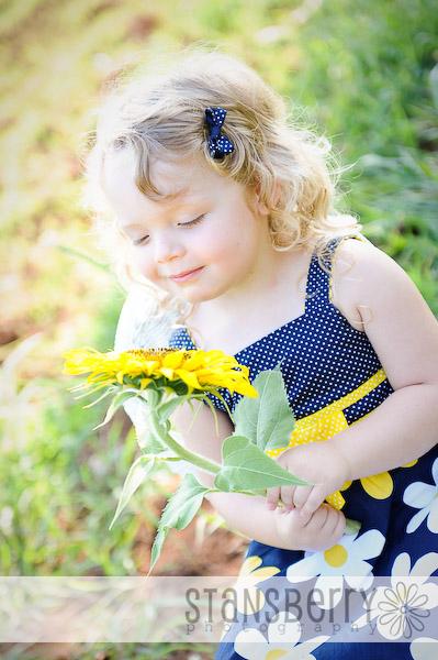 sunflowers-2265
