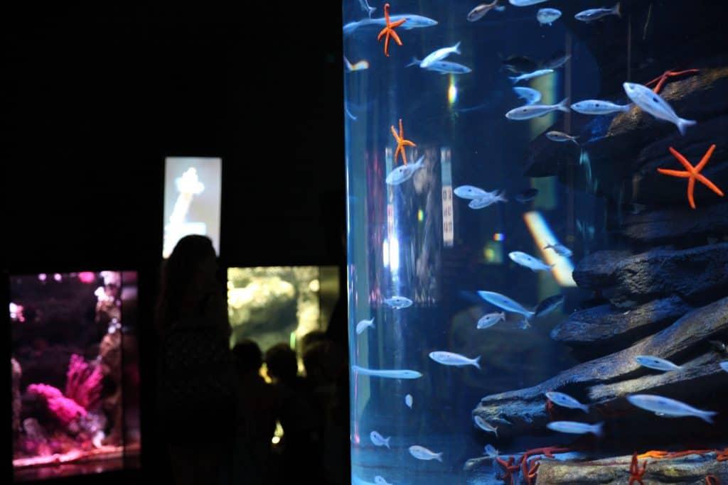 Découvrir l'Aquarium de Paris - Dans les Jardins du Trocadero