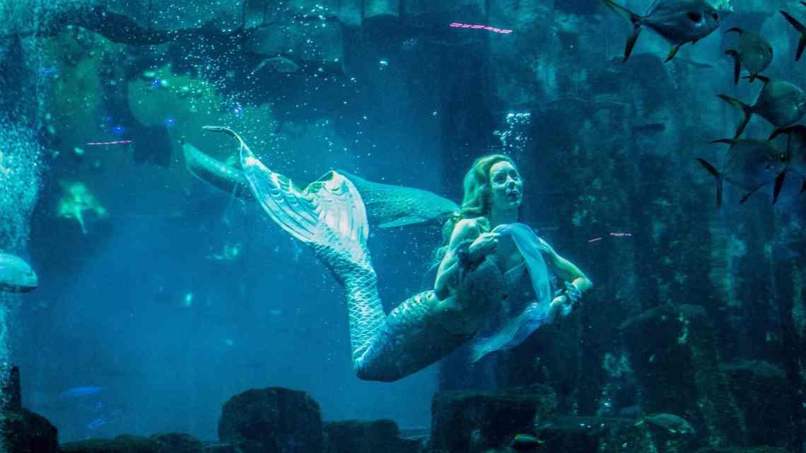 Claire la sirène - Spectacle aquatique - Aquarium de Paris