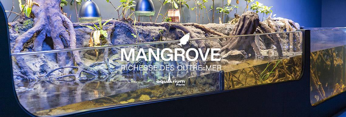 Mangrove - Aquarium de Paris