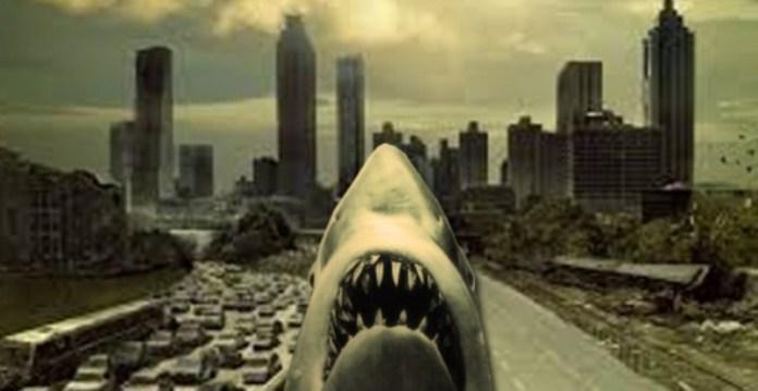 shark dead