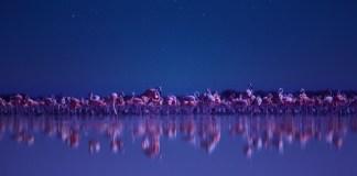 Notte sul pianeta Terra