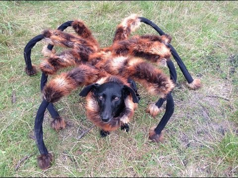giant-mutant-spider-dog