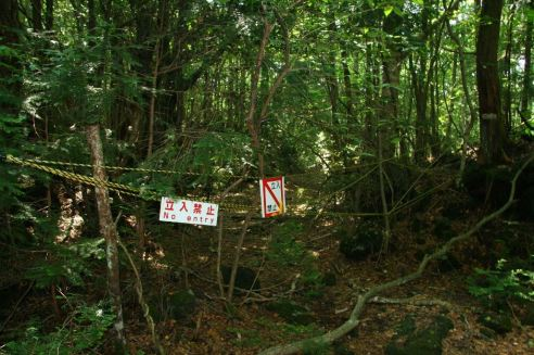 Suicide-Forest-Of-Japan