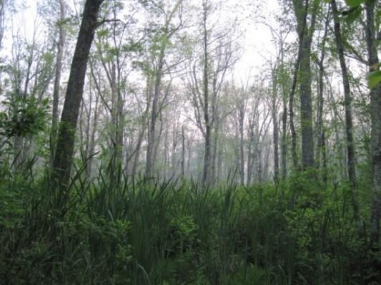 wbridgewaterswamp-570x428