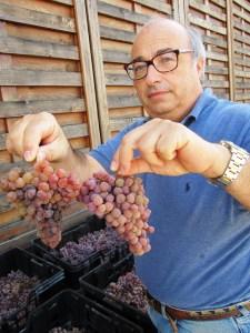 Carlo con l'uva di Traminer