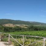 Old vineyard Casato Prime Donne