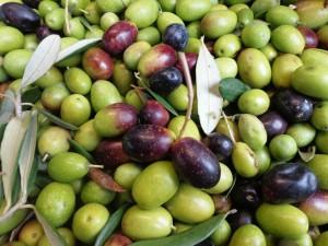 Olives 2012 Fattoria Del Colle