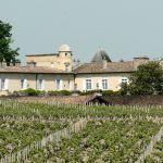 Lafite vineyards