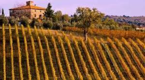 Vigneti in Toscana