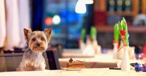 ristoranti con cani e per cani