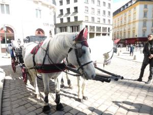 Vienna horses with ear warmers