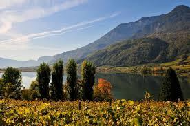 Alto Adige vineyards