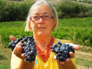 Sangiovese grapes Donatella Cinelli Colombini
