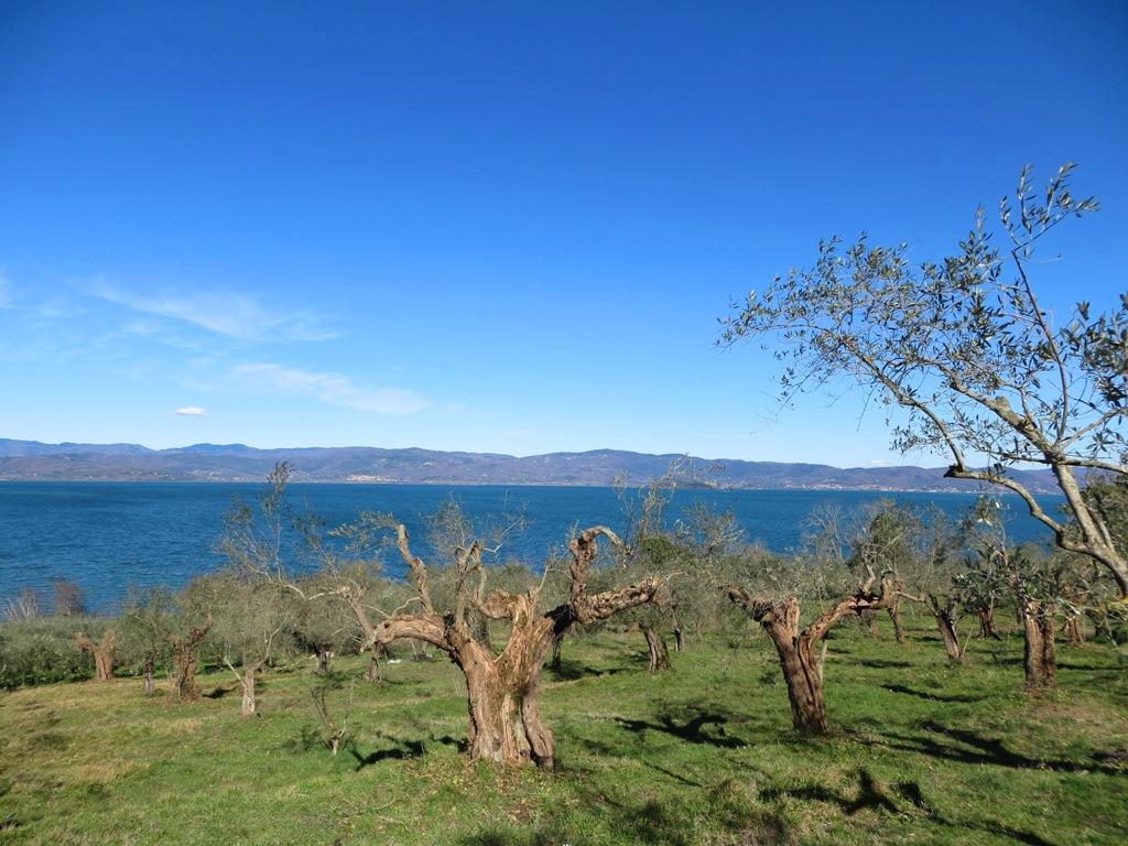 Lago-Trasimeno
