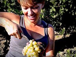 Wine- virtual -grapevine-Cantine-Barbera