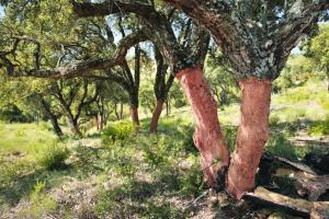 Diam-Bouchage-quercia-da-sughero