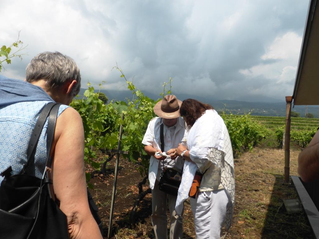 Vini-dei-vulcani-Scammacca del Murgo