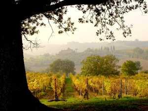 Quercia Italia Fattoria del colle  vigneti d'autunno