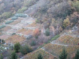 Valtellina, viticultura eroica