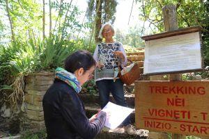 Fattoria-del-Colle-soggiorni-Trekking nei vigneti